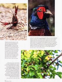 NaturFoto Heft 12/2020, Seite 70
