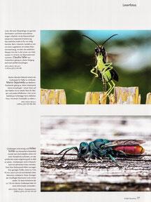 NaturFoto Heft 9/2020, Seite 77