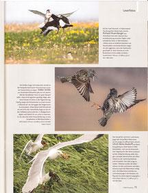 NaturFoto Heft 7/2018, Seite 73