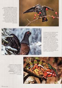 NaturFoto Heft 5/2019, Seite 72
