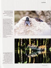 NaturFoto Heft 7/2020, Seite 71