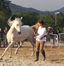 Liberté Classique cheval