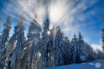 "Bild: ski area Winterberg, forest with snow, ""sun dust""; www.2u-pictureworld.de"