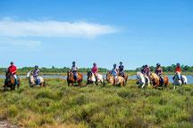 Vous visiterez le marais au pas du cheval, et découvrirez la faune et la flore de la Camargue