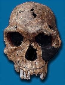 Homo habilis - Lago Turkana