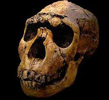 Homo erectus - Lago Turkana