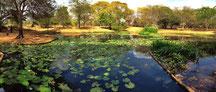Laguna de Lotos del J.B.M.