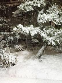 和エステ心美のブログ、雪の風景、可児