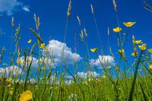 Saftige Sommerwiese
