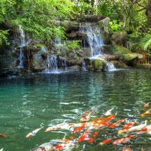 Jardin Botanique Phuket - Guide francophone