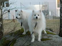 Tendo och Yuki