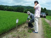 魚沼産コシヒカリ・減農薬特別栽培
