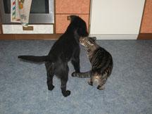 Es gibt auch Katzen für dich Luzy