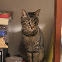 「うみ」我家の美人先住猫♀