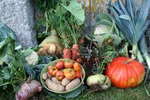 légumes bio du potager du Drac
