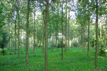 Plantation fruitiers à bois (TG)