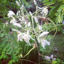 花から鞘が伸びたところ