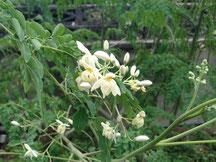 種から3か月目くらいで、花が咲きますす