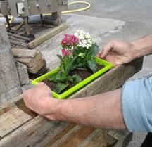 Mise en place de potées de fleurs dans des palettes transformées en jardinières