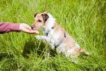 Hund frisst Menschen aus der Hand