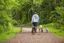 Hundetrainerin Rebecca mit Hundegruppe aus ihrem Gassi Service auf einem Waldweg in Altona