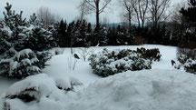 Blick in meinen Garten vom Mittwoch den 13.03.2013 um 14:00 Uhr. Temperatur -3°C. Es gab über Nacht einen Schneesturm.