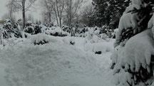 Blick in meinen Garten vom Montag den 10.12.2012 um 14:40 Uhr Naturschneedecke beträgt ca. 25 cm Temperatur 0°C
