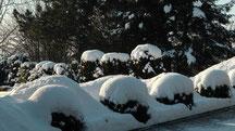 Blick in meinen Garten vom Samstag den 08.12.2012 um 11:36 Uhr Naturschneedecke beträgt ca. 15 cm Temperatur -4°C