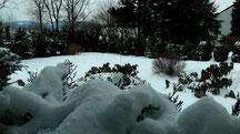 Blick durch mein Küchenfenster in meinen Garten vom Mittwoch den 13.03.2013 um 14:00 Uhr. Temperatur -3°C. Es gab über Nacht einen Schneesturm.