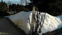 Blick in meinen Garten vom Sonntag den 07.04.2013 um 18:31 Uhr. Temperatur in der Sonne +8°C nachts klar -1°C der Winter verabschiedet sich auch aus meinem Garten.