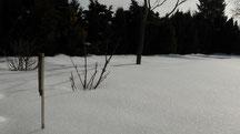 Blick in meinen Garten vom Samstag den 02.03.2013 um 11:30 Uhr. Bis zu 20 cm beträgt noch die geschlossene Naturschneedecke. Temperatur 0°C.