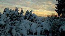 Blick in meinen Garten vom Donnerstag den 13.12.2012 um 09:25 Uhr Naturschneedecke beträgt ca. 30 cm Temperatur -8°C