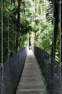 Caminata Puentes Colgantes del Arenal