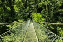 Combo: Canopy Tour & Puentes Colgantes