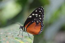 Costa Rica img-0671