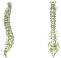 colonna vertebrale e rapporti con la sciatalgia