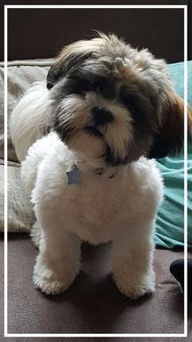Boomer pups Twente twentscheweide hengelo