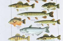 poisson record