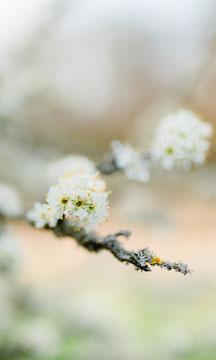 SpringWallpaper (2)
