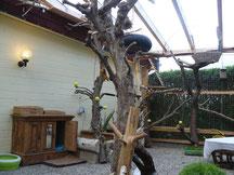Naturbäume und Klettermöglichkeiten im Freigehege