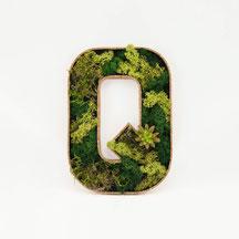 MONDEIS Moos-Buchstaben Q