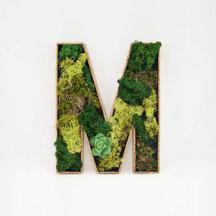 MONDEIS Moos-Buchstaben M