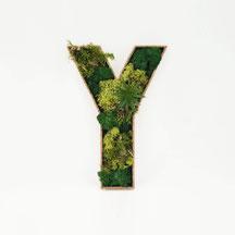 MONDEIS Moos-Buchstaben Y
