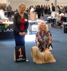 BOB Dortmund 2015 Lhasa Apso Close To Perfection Next  To You