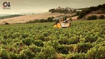 Wine Harvest 2018/2019