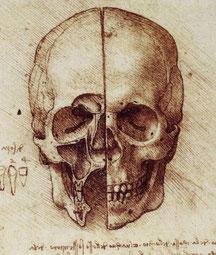Crâne dessiné par Léonard de Vinci