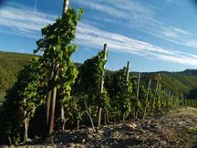 """Der Weinort Rech liegt auch am Rotweinwanderweg. Dort liegt eine der besten Weinberge der Ahr, der """"Recher Herrenberg""""."""