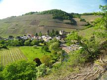 Der Rotweinwanderweg schlengelt sich durch die Weinberge rundum Marienthal.