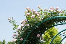 日よけになるバラのアーチ