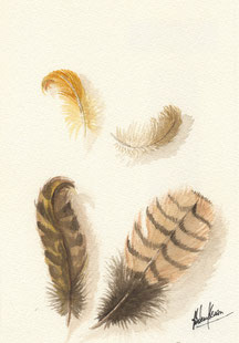 Plumes à l'aquarelle-Partie d'un tryptique.